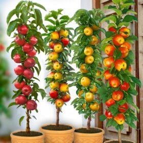 Stupolike voćne sadnice