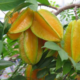 Egzotične sadnice