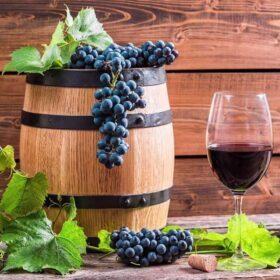 Vinske sorte